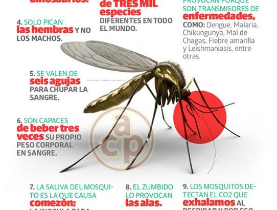 Te conozco mosquito por el zumbidito